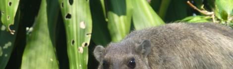 Chiang Mai, der reinste Zoo und tierisch gut