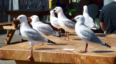 Akaroa - eine kleine 'Hippe' Touristenstadt