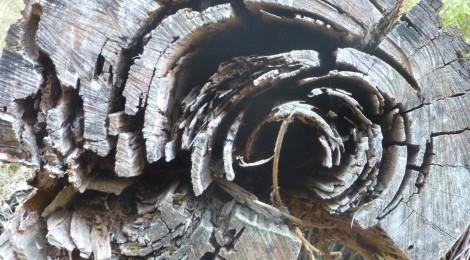 Mount Eccles National Park- diverse Bären und der Waldcampingplatz